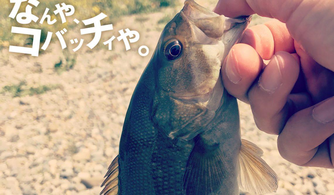 コバッチィとナマズしか釣れねぇ【4/10~4/25釣行】