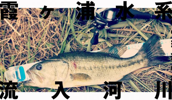 流入河川の季節到来か?40UP含む7キャッチ【6/24霞ヶ浦水系】
