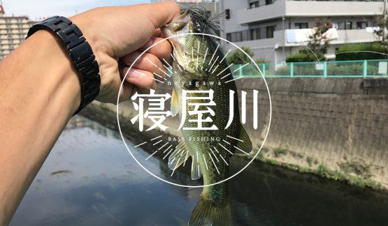 大阪・寝屋川でバス釣りしてみた【10/1】