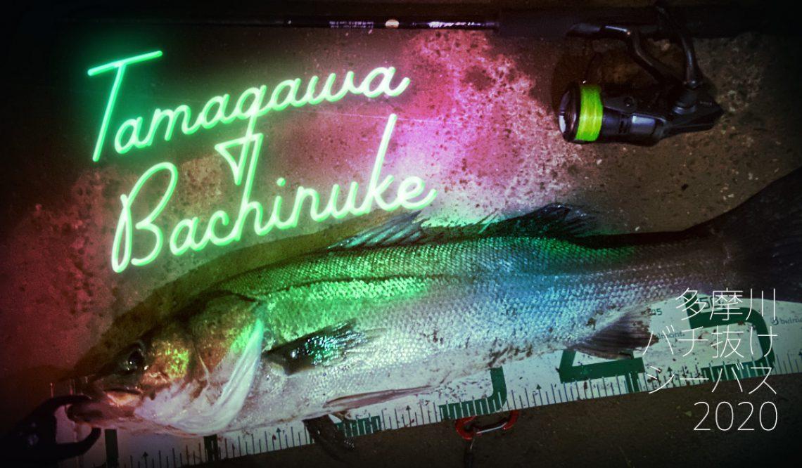【バチ抜け】やっと釣ったぞ多摩川シーバス【2020】